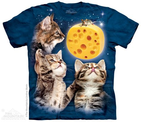 cat cheese cheese cat bing images
