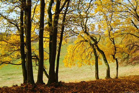 trees that turn yellow in fall gluten free vegetarian recipes yogamed blog