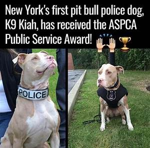 Kiah, 1st Pit Bull Police Dog In NY To Receive A Public ...