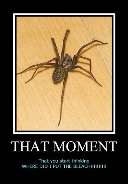 Spiders Spider Australia Joke Hate Wall Saw