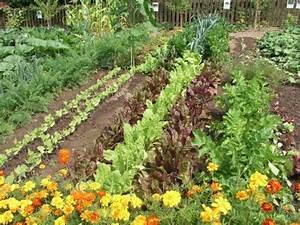 Gemüsegarten Anlegen Beispiele : anbauplanung im gem segarten mein sch ner garten ~ Lizthompson.info Haus und Dekorationen