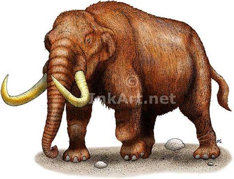 mastodon mammut americanum  art  full color