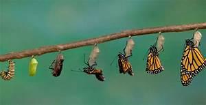 Transformación y trascendencia TuEstima Guías, Artículos y más para el Crecimiento Personal