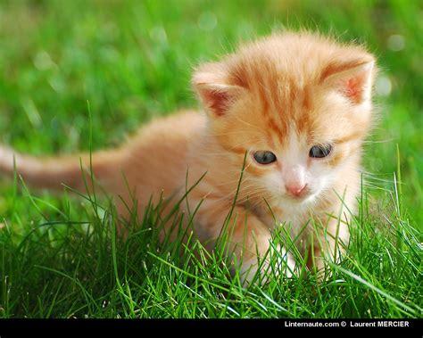 petit ordinateur de bureau belles photos de chats les petits chats