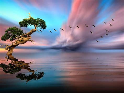 solitary tree lake birds  flight red cloud sunset