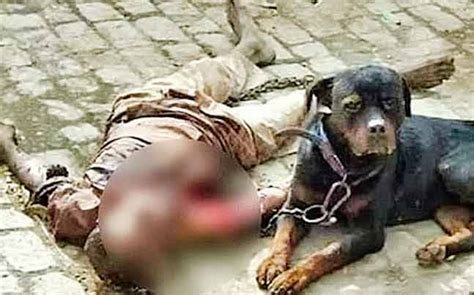 panipat rottweiler  killed caretaker ate body