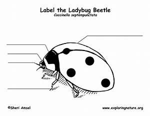 Ladybug Labeling Page