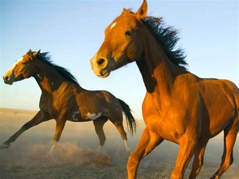 18 Amazing Facts About Horses - YouTube