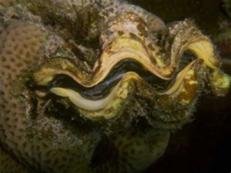 mollusks   animal kingdom animal kingdom