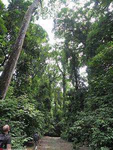 How to experience the Borneo rainforest - Danum Valley ...
