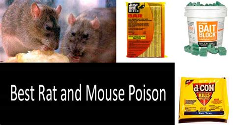 best rat and mouse poison top 5 the most effective