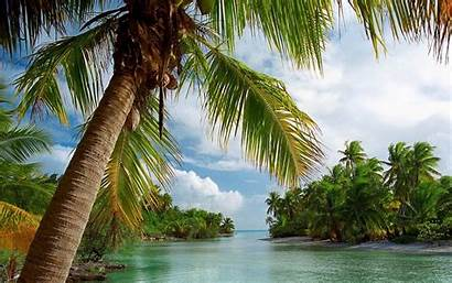 Palm Trees Tropical Beach Summer Island Landscape