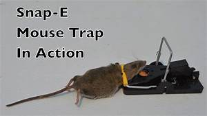 Snap-e Mouse Trap In Action With Motion Cameras