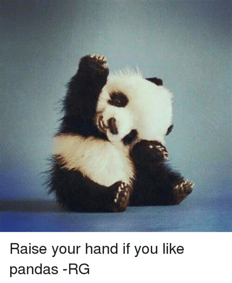 Raising Hand Meme - raise your hand if you like pandas rg meme on sizzle