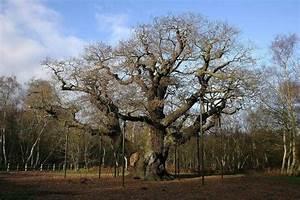 Foret De Sherwood : la foret de sherwood angleterre ~ Voncanada.com Idées de Décoration