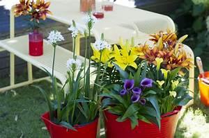 Bulbes D été : plante de jardin du mois de juillet bulbes d t en pot ~ Melissatoandfro.com Idées de Décoration
