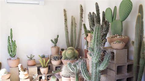 10 Ways Work Cactus Trend by La S Coolest Cactus Store Arrives In Echo Park Racked La