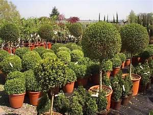 Kleine Bäume Vorgarten : die aktion b ume f r den vorgarten geht in die 2 runde ~ Michelbontemps.com Haus und Dekorationen