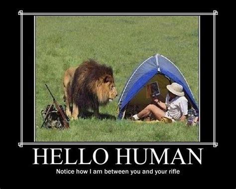 lion win demotivational posters   meme