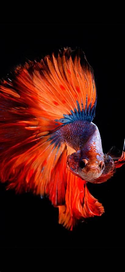 Iphone Fish Wallpapers Max Pro Orange Xs