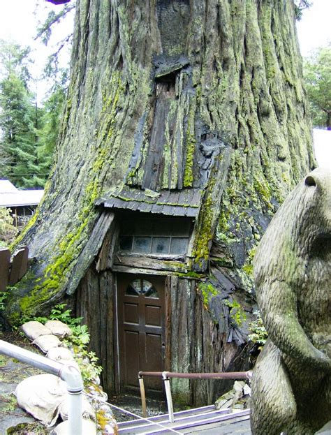 tree house hotel redwood forest redwood treehouse redwood treehouses pinterest