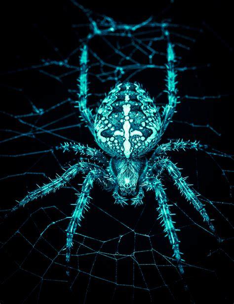 Coole Spinne Foto & Bild  Tiere, Wildlife, Spinnen Bilder