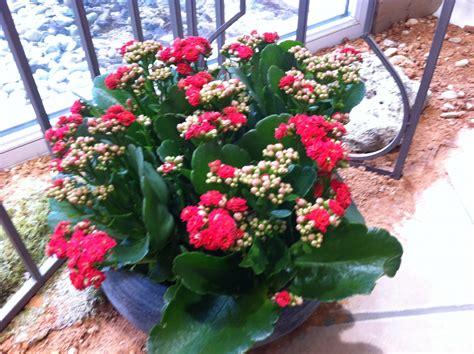 plantes vertes et fleuries aux passiflores