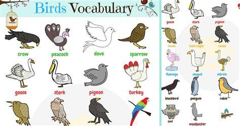 Bird Names: List of Birds with Useful Birds Images Bird