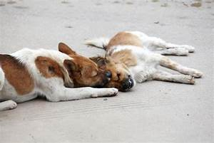 Loyal dog in Zhangzhou refuses to leave fatally-stricken ...
