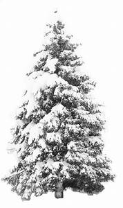 Pics For > Snow Tree Png