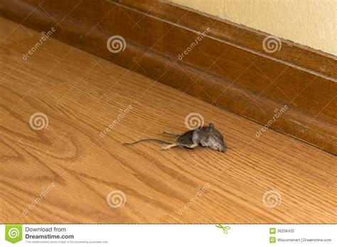 la chambre des morts explications fin rongeur mort de souris dans la chambre ou la maison