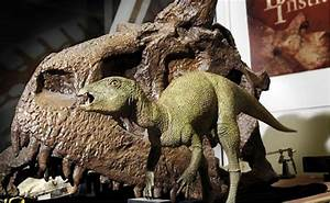 10, Strange, Facts, About, Dinosaurs, You, Never, Knew