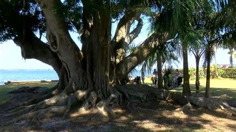 woman marries  year  tree  hopes  saving