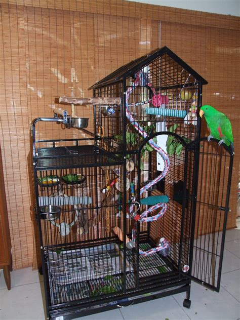 african grey parrot african grey cage and environment