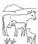 Coloring Cow Pages Animal Comments sketch template
