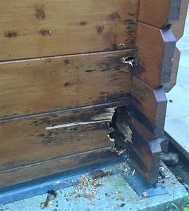 Realiser Un Plancher Bois : probl me avec abri de jardin ~ Dailycaller-alerts.com Idées de Décoration