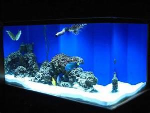 Fish Tank Background Fish Aquarium Gallery Of Aquatic Designs Aquarium
