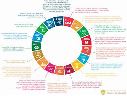 Sustainable Development Goals Sdgs Forests Goal Global