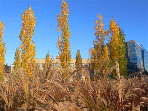 il nuovo parco quot biblioteca degli alberi quot a che punto sono i lavori i giardini di babilonia