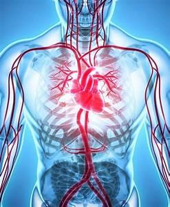 When Should I Get A Vascular Screening