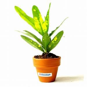 Plante Dpolluante De Bureau En Pot Terre Cuite Objet
