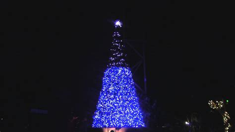 christmas tree terrace light show at busch gardens ta s