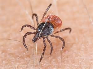 Get With Public Health: June 2010 Rocky Mountain Spotted Fever