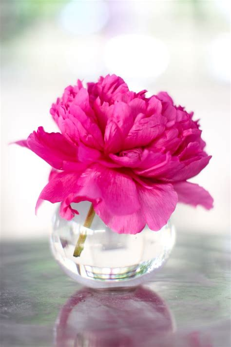 peony vase 94 best table flowers images on