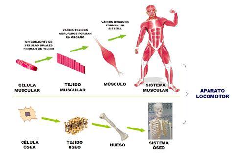 24 TES: Aparatos y sistemas del cuerpo humano