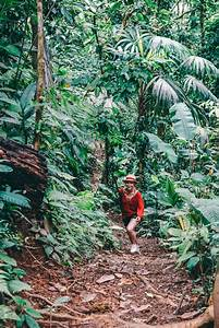Aus Dem Dschungel In Den Dschungel : den dschungel kann man nicht beschreiben den muss man ~ A.2002-acura-tl-radio.info Haus und Dekorationen