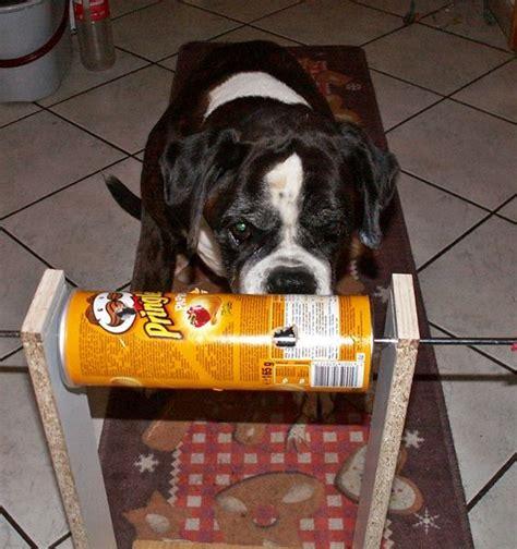 mein basteltipp hunde intelligenzspielzeug bauen  psi