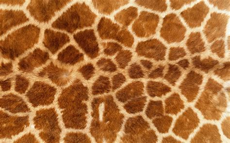 Animal Skin Wallpaper - fmp design context bacardi animal skin
