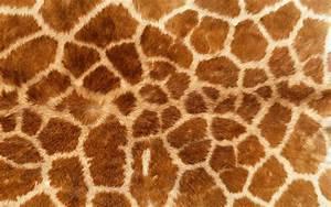 FMP- Design Context: Bacardi- Animal Skin