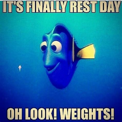 Gym Humor Memes - quot it s finally rest day oh look weights quot fitness humour meme sports humour pinterest